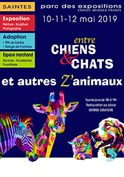 CHIENCHATS2019